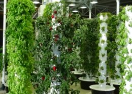 Dubai to build world's largest vertical farming facility
