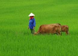 FAO calls for urgent action to improve nutrition and diets in Asia-Pacific
