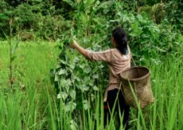 Indonesia need to improve nutrition and rural livelihoods for high income status