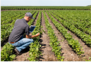 IoT to transform agricultural sector