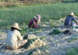 Myanmar launches new policy to boost development