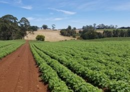 Australia emerges as a natural global hub for Agriculture 4.0