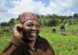 IFAD launches online tool for agricultural and rural development