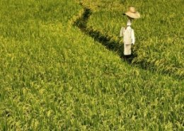 Oxfam brings blockchain solution for Cambodian rice farmers