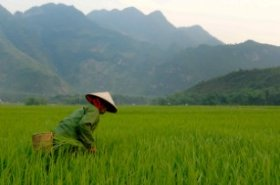 Asia-Pacific need to focus on protecting agriculture from climate change