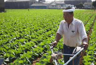 Japanese farmer byGullevek flickr