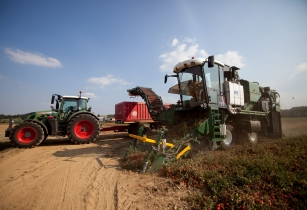 Volvo Penta powers MTS-Sandei's latest tomato harvester