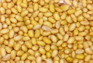 Background Soy Vegetables Beans Yellow 1420508