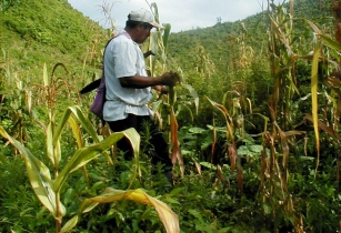 Belize farming gm
