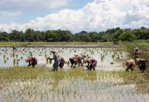 IRRI's MYRice project to improve farmers' lives in Myanmar