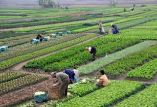 Forest and Farm Facility initiative to improve livelihoods of farmers