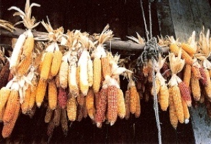 China's corn import to surge 85 per cent in 2013