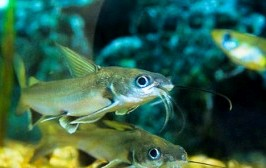 Vietnam launches first fish vaccine