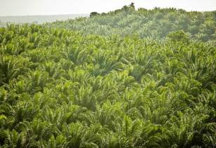 palmoil RainforestActionNetwork flickr