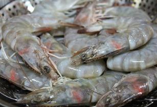indonesian shrimp export Website resmi kementerian perdagangan republik indonesia sunday, 01 april 2018 home // statistics // indonesia export/import indonesia export/import.