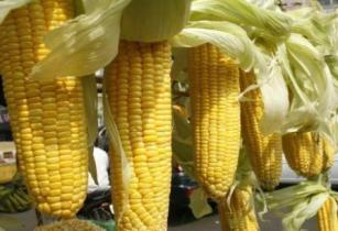 american food and grains commodity and Commodity trading companies  a commodity trader is one of the essential actors on  geneva is the world's number one hub for the trade of grains and.