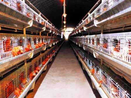 Achieving the ideal environment for birds depends on appropriate management of the poultry house