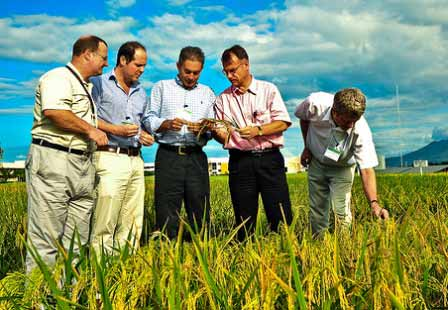 IRRI_launches_Sustainable_Rice_Platform_initiative