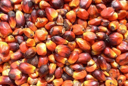 Palm oil-INdonesia