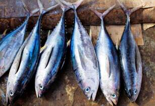 Vietnamese tuna exports to China up 253 per cent