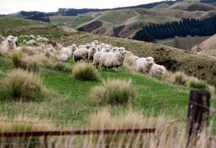 New Zealand Rural landscape 9850