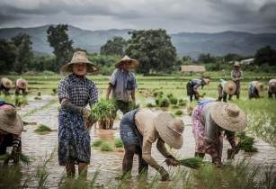 myanmarpaddy josepcastell flickr