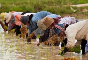 ricefieldcambodia deptforeignaffairs flickr